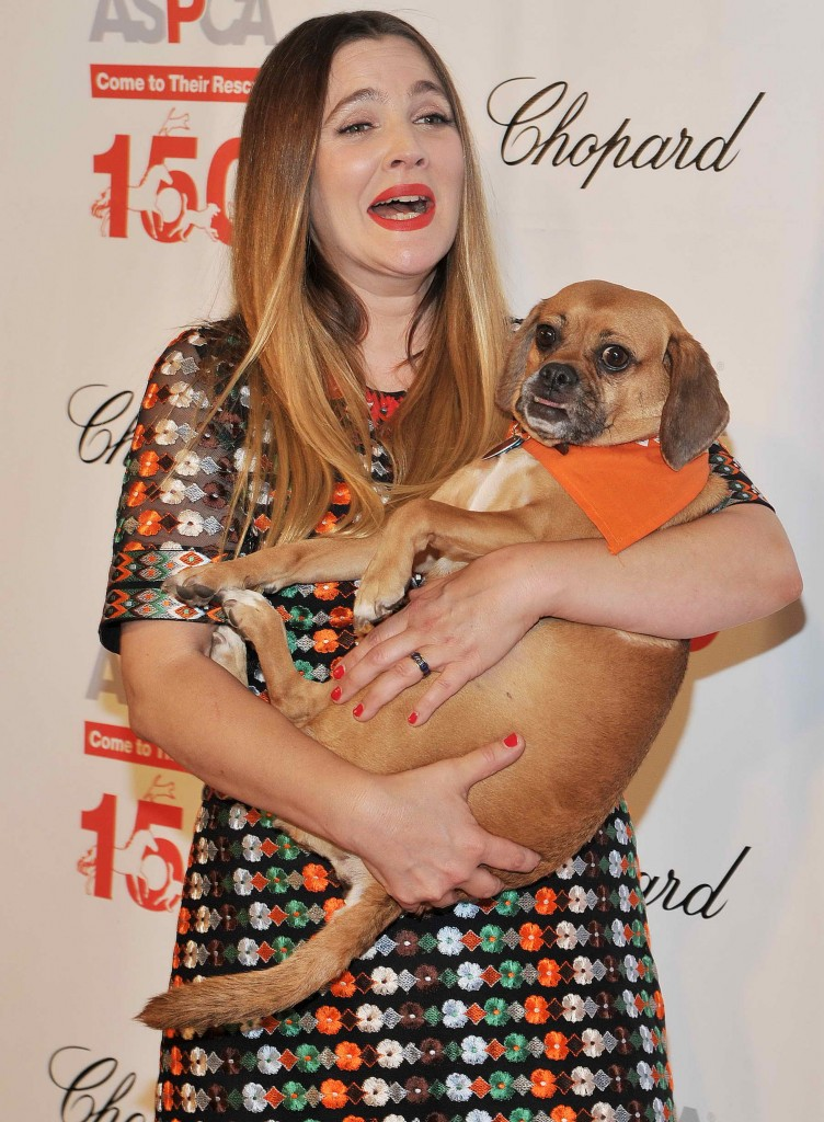 Drew Barrymore at The 19th Annual ASPCA Bergh Ball at The Plaza Hotel in New York-1