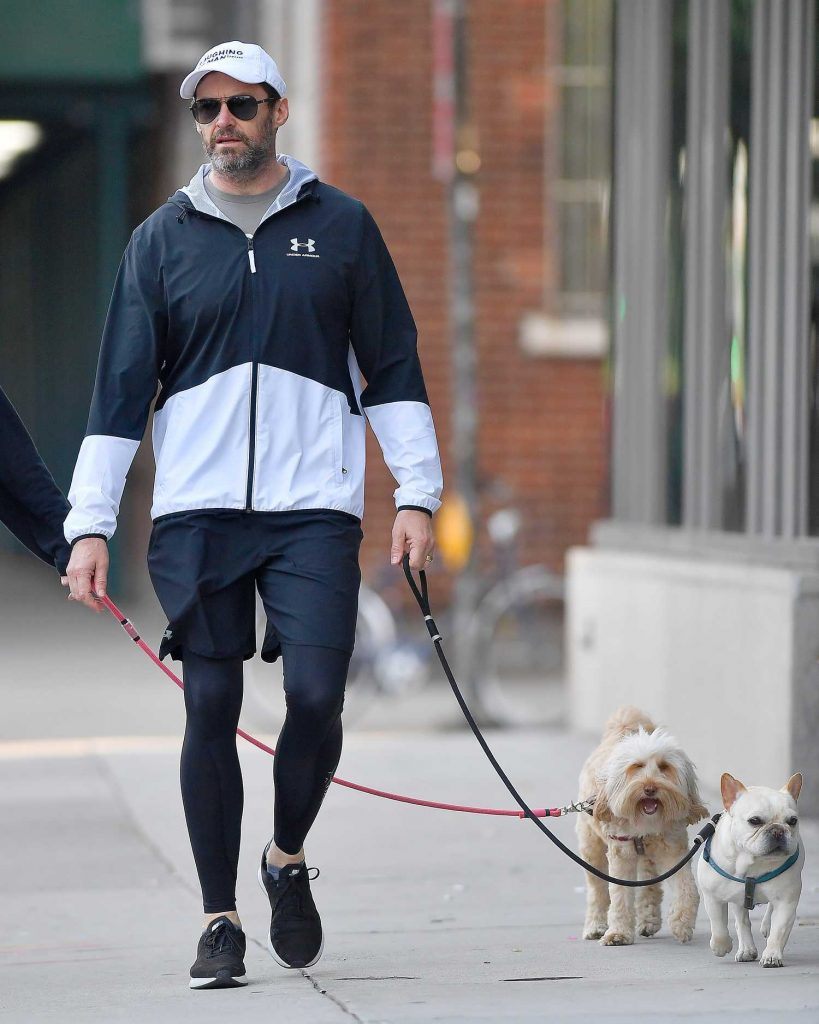 Hugh Jackman Walks His Dogs Out in New York City-4