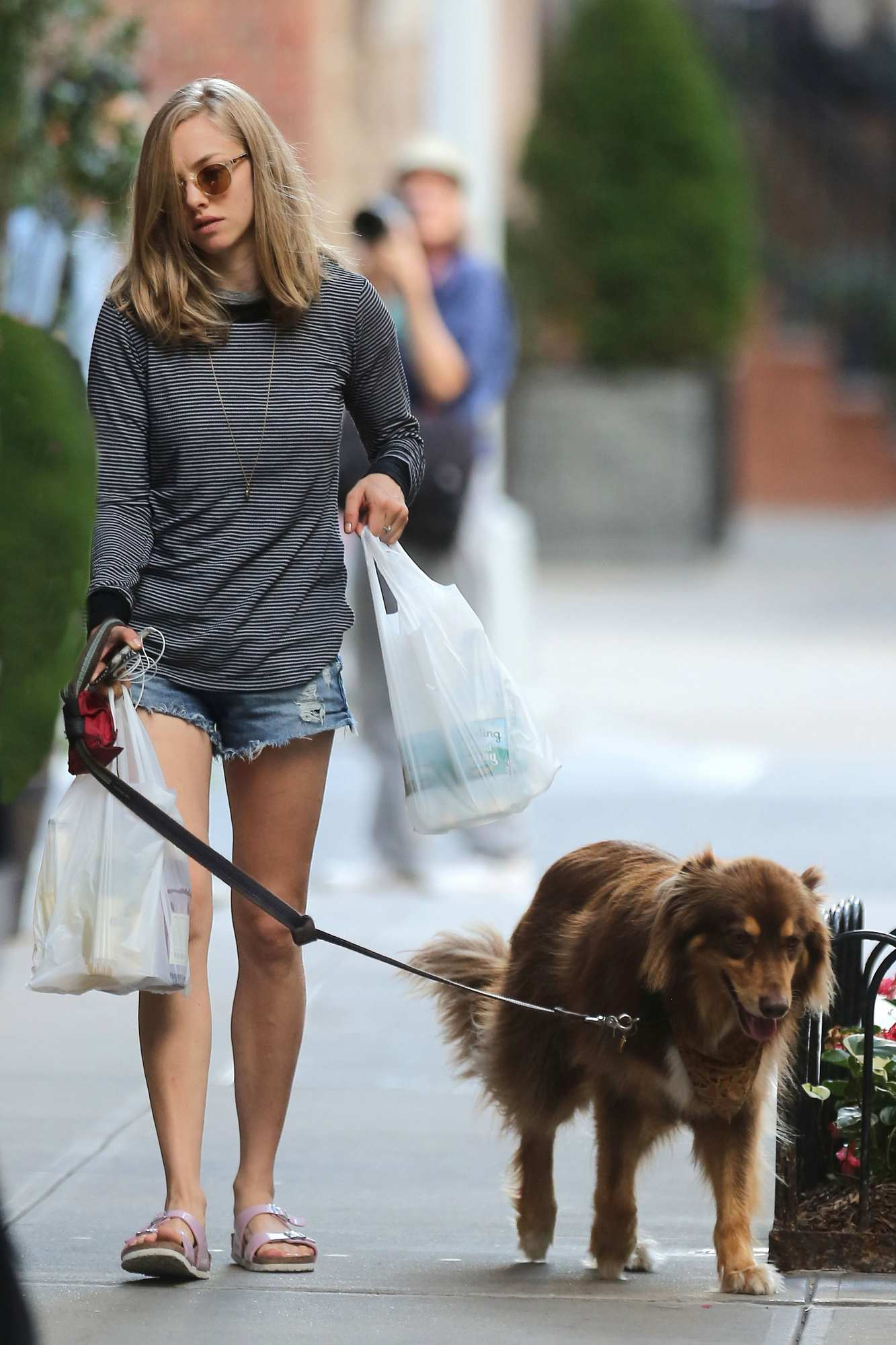 Amanda Seyfried With Short Jeans Strolling Her Dog In Nyc 4